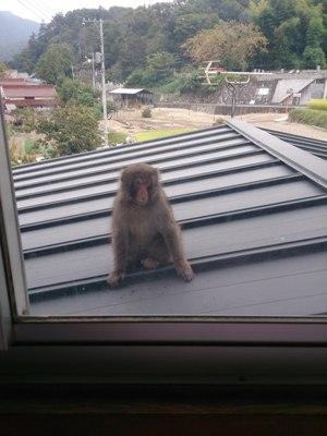猿120141002