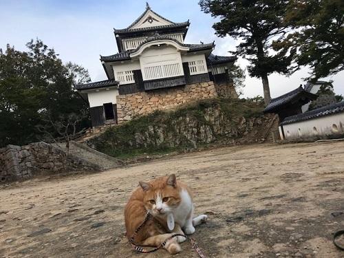 お城20201010