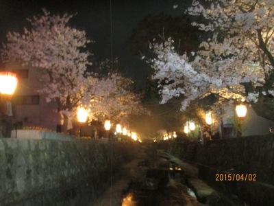 夜桜20150402