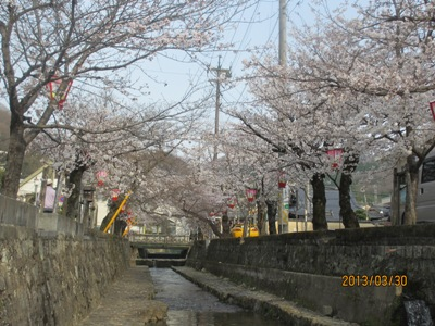 桜20130330