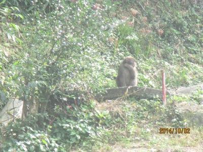 猿220141002