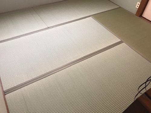 あおやぎ20200318